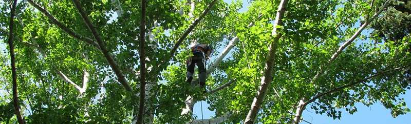 Tree inspector. The image from https://www.saskatoon.ca/services-residents/housing-property/city-owned-trees-boulevards/tree-maintenance-inspections