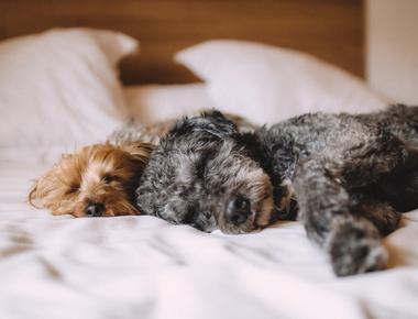 Dog Wants to Sleep with You All of a Sudden? Here's Why