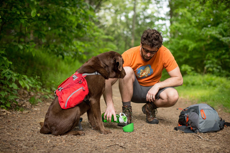 18 Dog-Friendly New England Fall Destinations