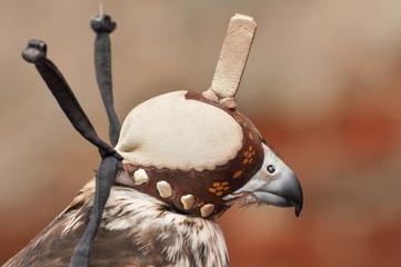 A Falconry hood