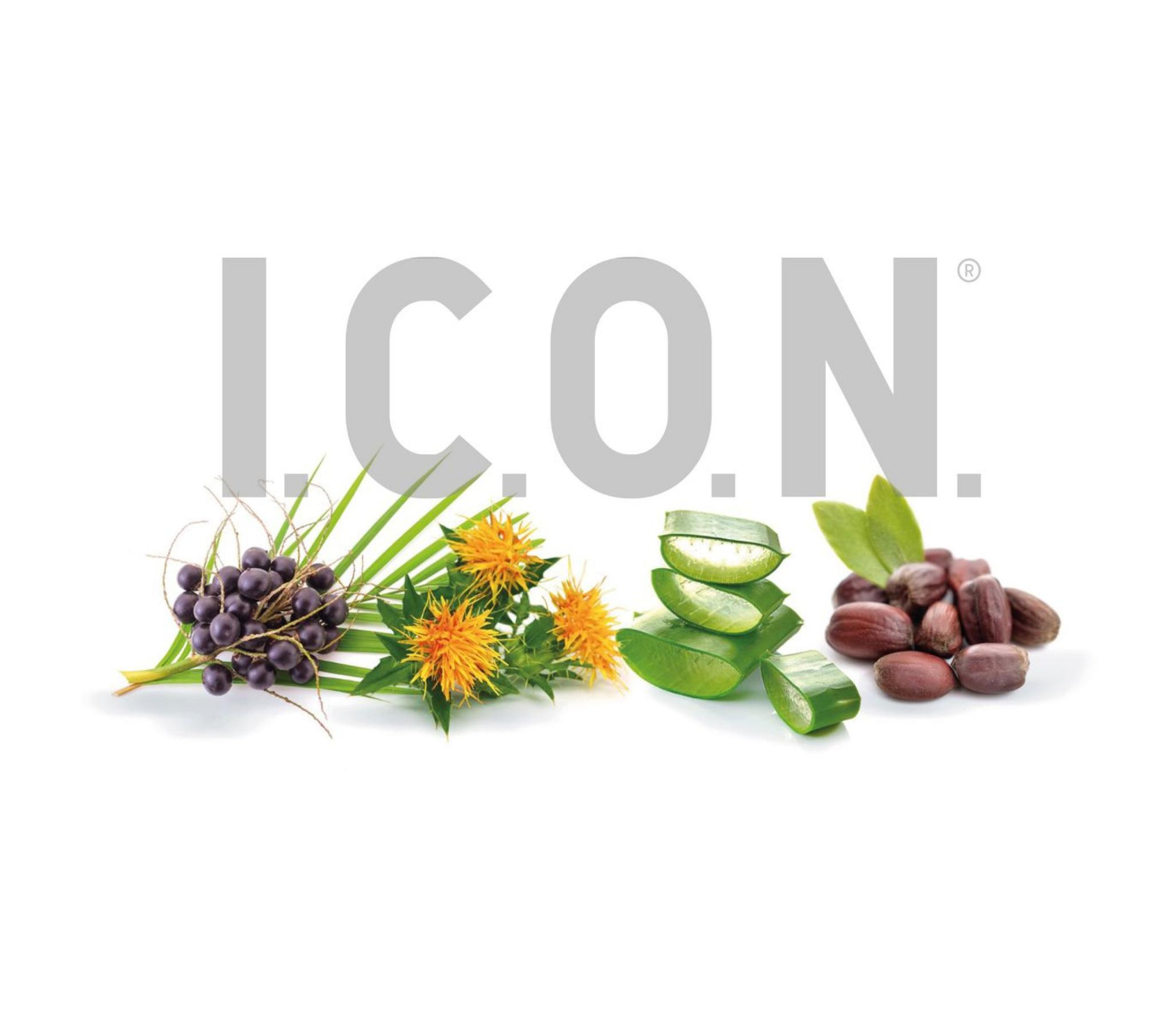 Morccan oil