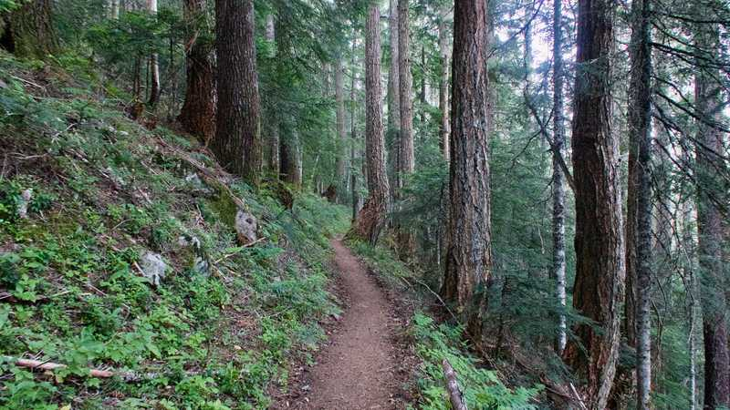 The PCT climbs from Wahtum Lake