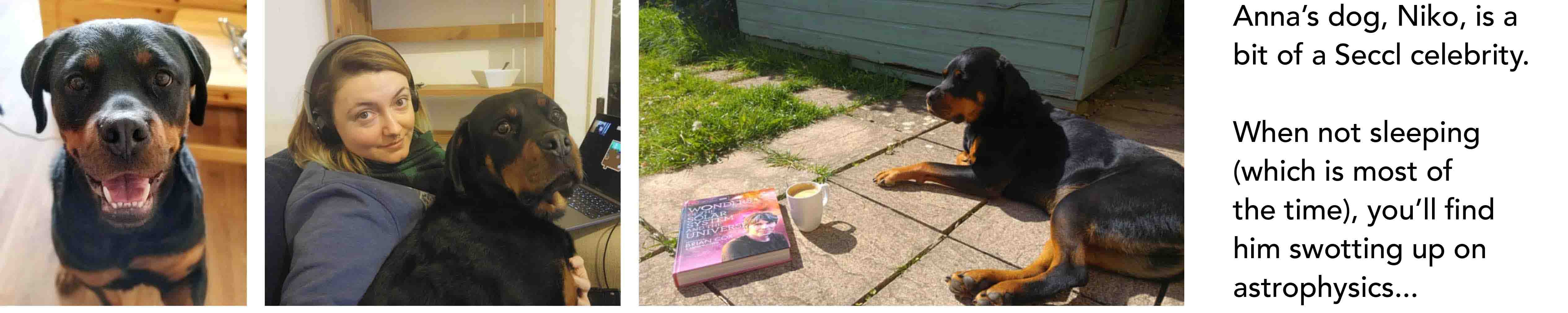 Anna's dog, Niko, is a bit of a Seccl celebrity. When not sleeping (which is most of the time), you'll find him swotting up on astrophysics...)