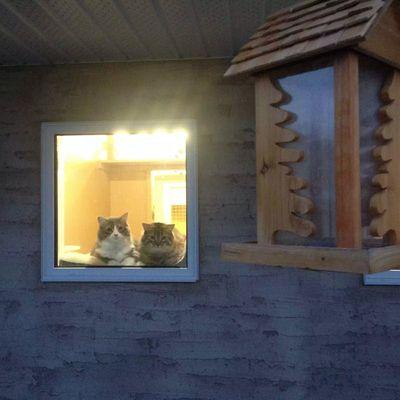 cat-boarding-facility