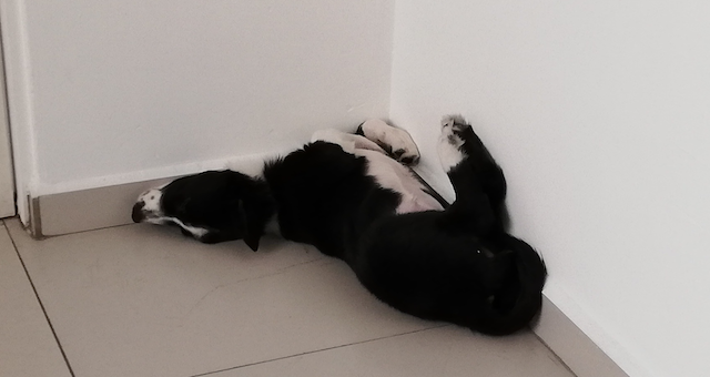Nina acostada en una esquina con las patas hacia arriba.