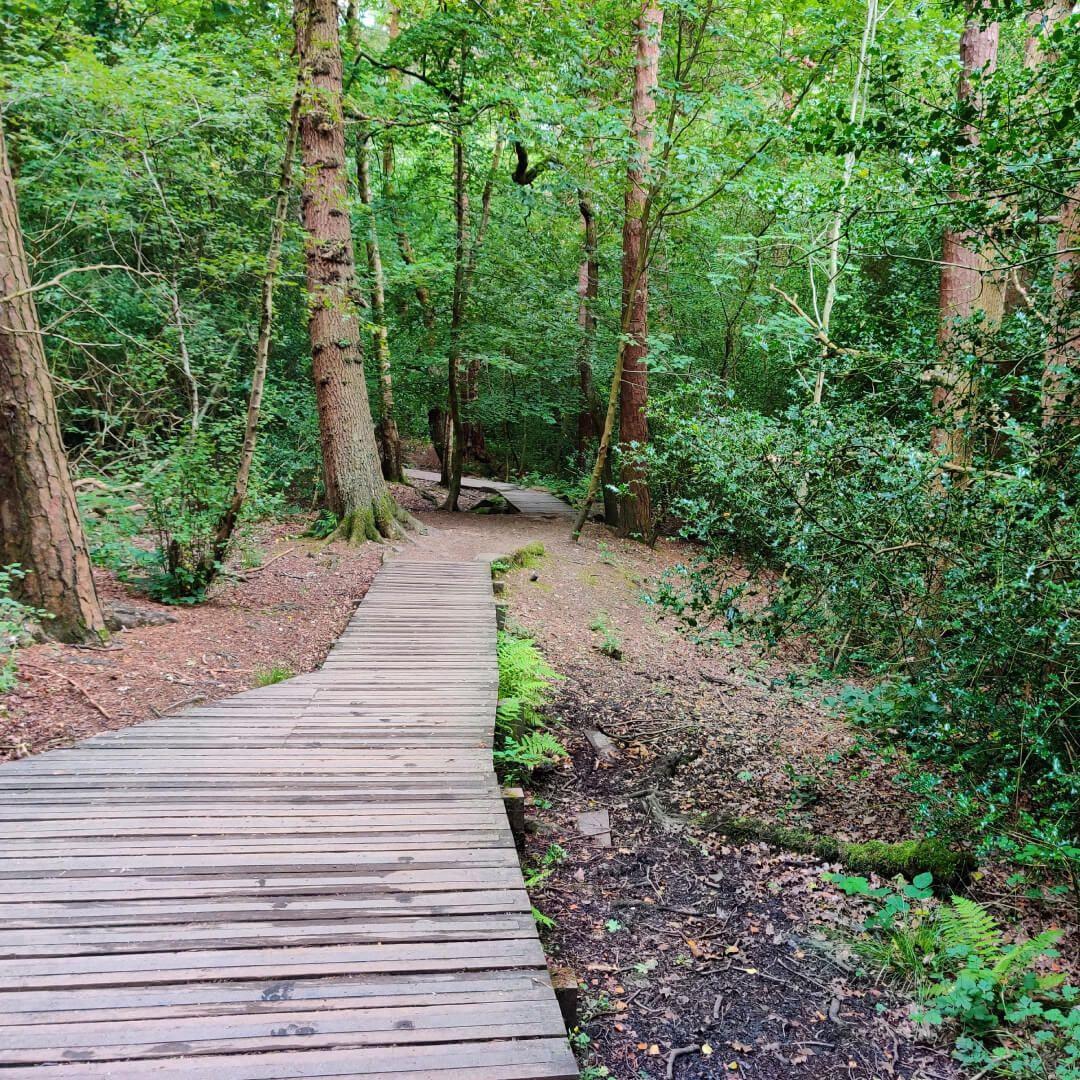 Raised wood path through Scotland Wood
