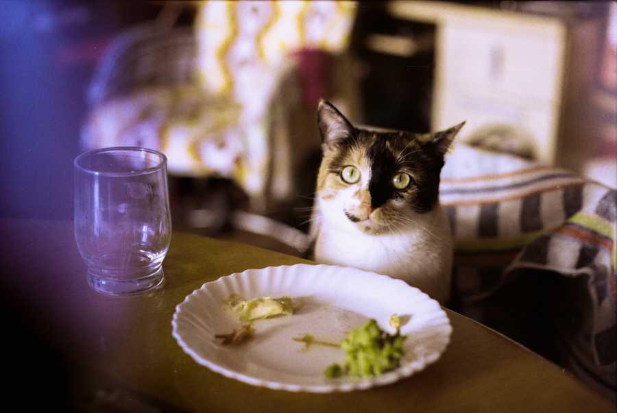 Leaky cat