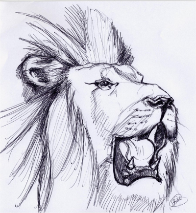 Lion Roar Sketch