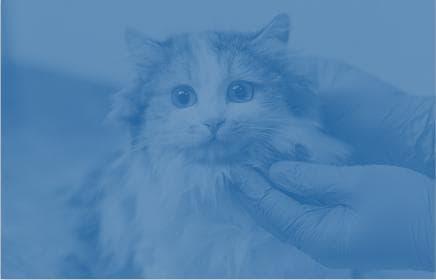 veterinarian with cat