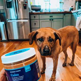 cbd peanut butter for dogs