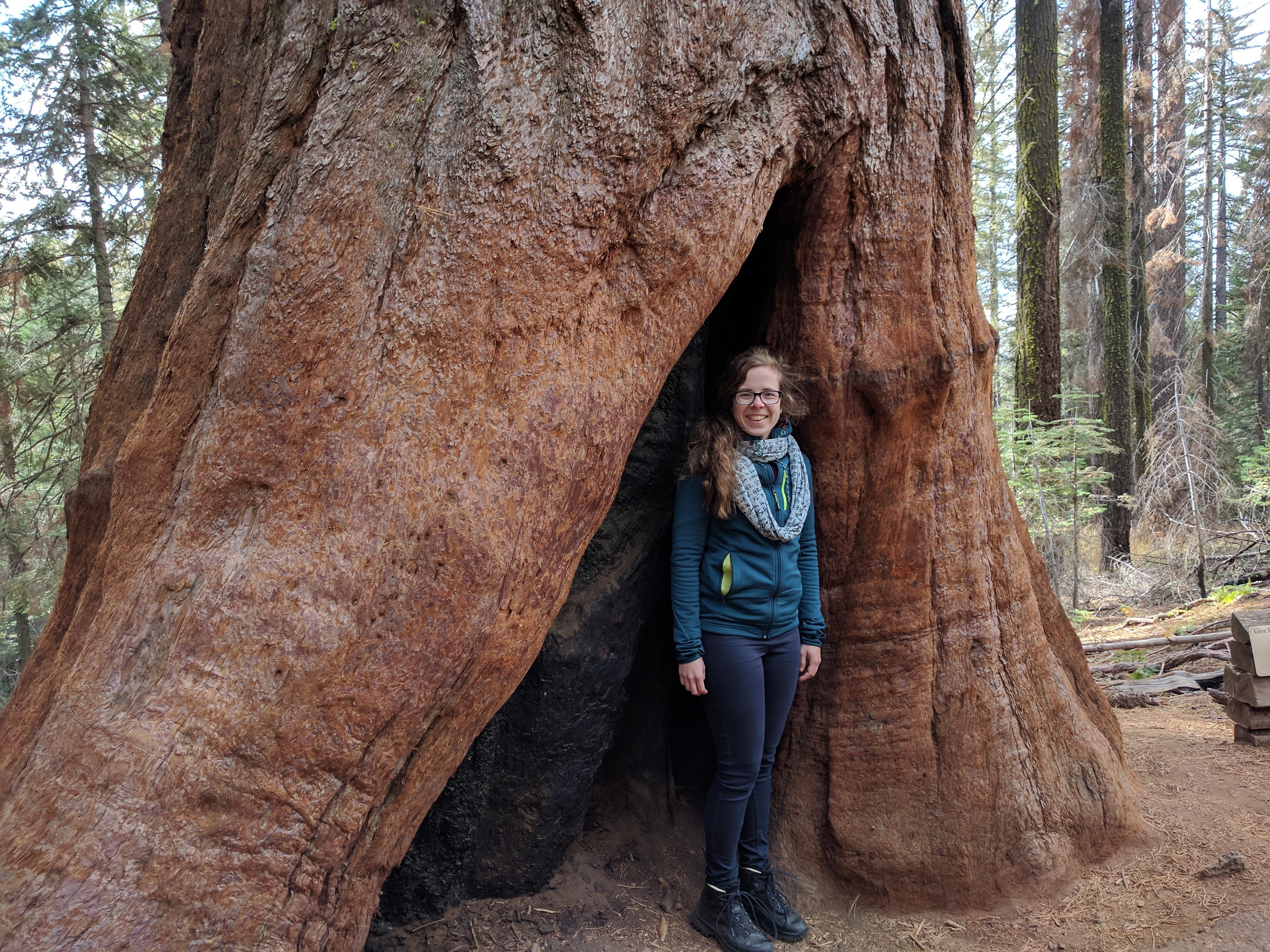 Tuolomne Grove - Giant Sequoias