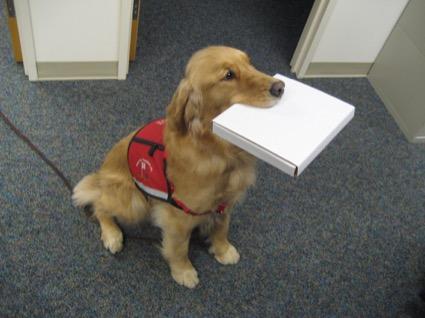 dog delivering parcel