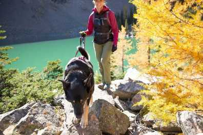 Pet-Friendly Leaf Peeping Destinations