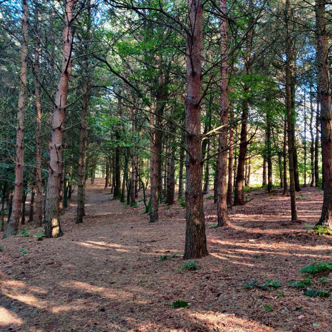 Otley Chevin Forest Park dense woodland