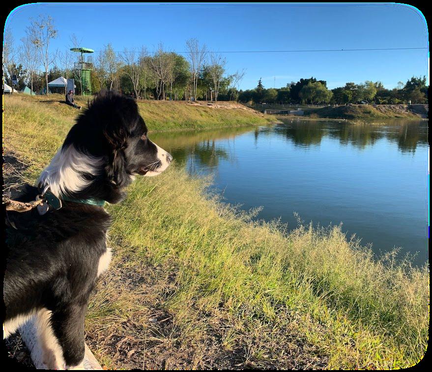 My dog, looking at the horizon