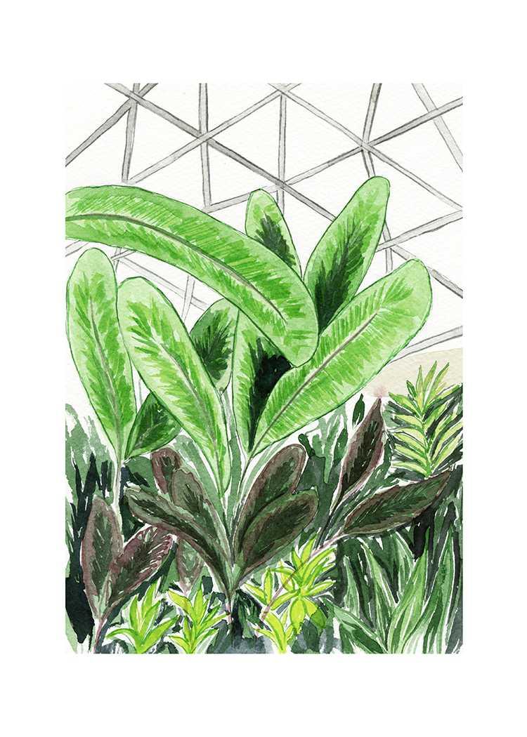 Bloedel Conservatory Illustration