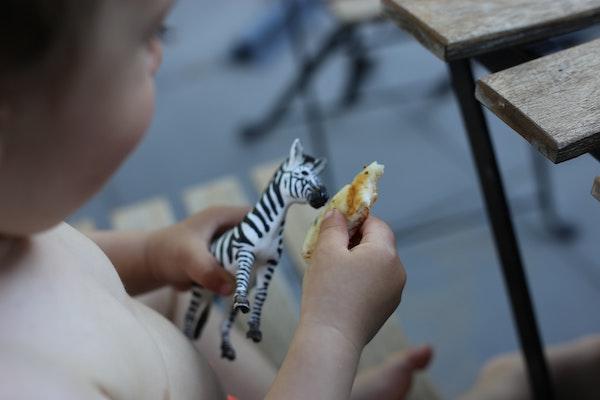 niño jugando con un cebra