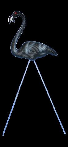 Zombie Flamingo photo
