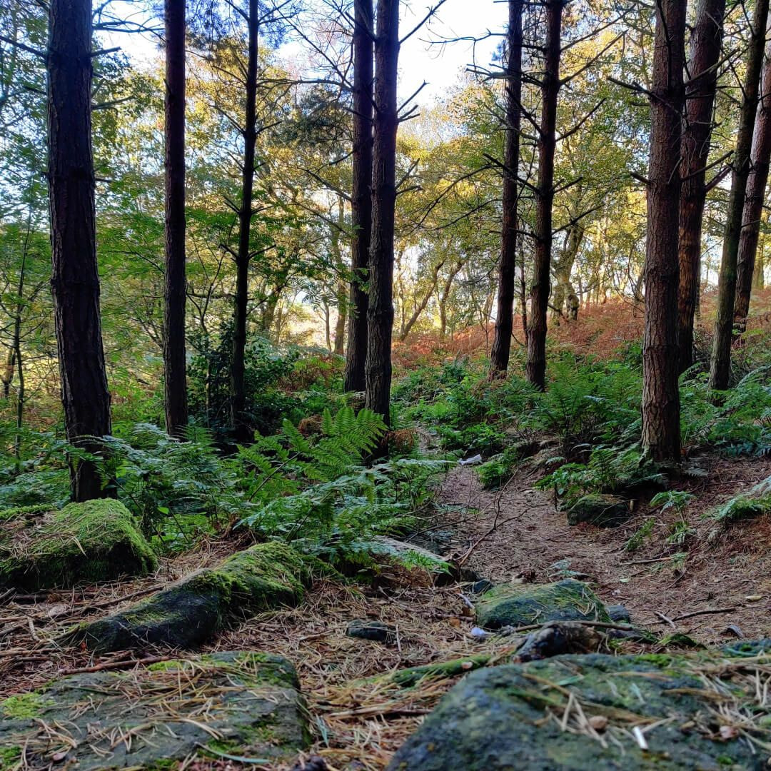 Otley Chevin Forest Park dense woodland