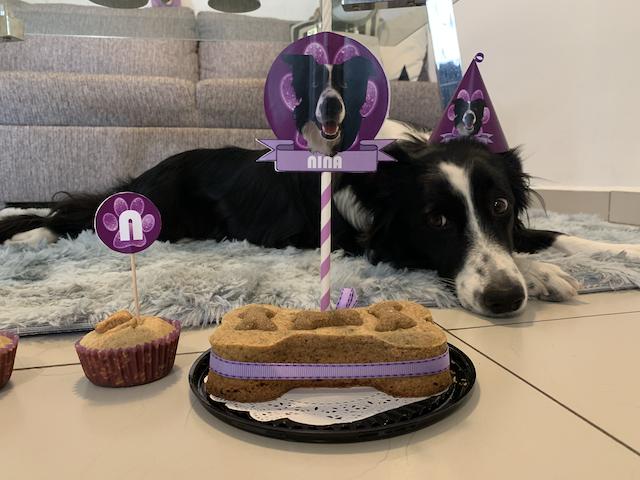 Nina con su gorrito de cumpleaños viendo ansiosamente su pastel en forma de hueso.