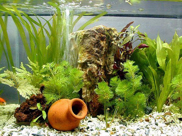 Aquarium Plants – Aquarium Planting Basics