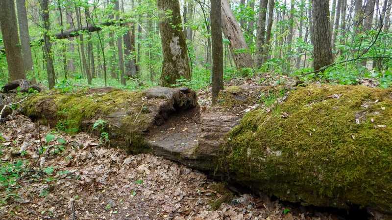 Step cut in log