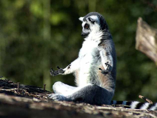 Animal in yoga pose