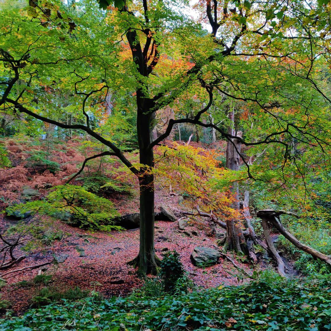 Adel Wood tree