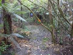 Pukapuka Track