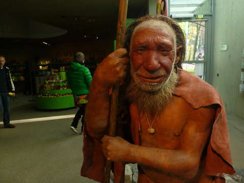 Музей Неандертальского человека