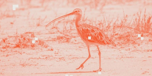 featured image thumbnail for post What kind of bird makes that sound?