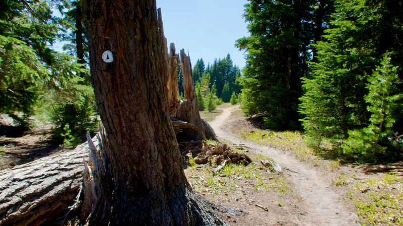 The Pacific Crest Trail in Oregon