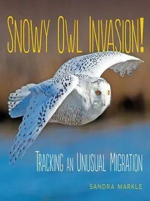 Snowy Owl Invasion