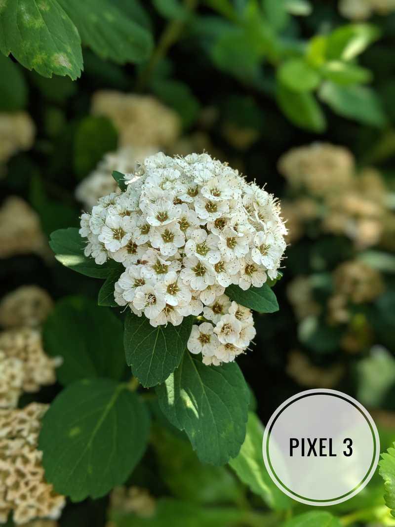 Pixel 3 Portrait Mode