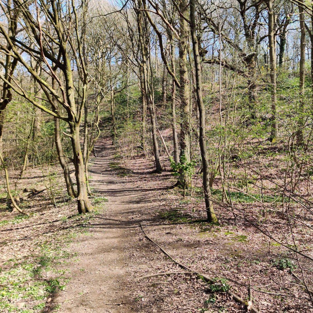 Path through Nan Whins Wood (Sykes Wood)