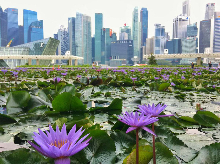 American Sarah Emery talks about Expat Life in Singapore