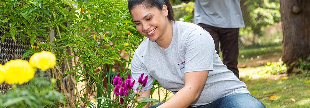 A healthy Hawaiian woman is planting flowers in her yard