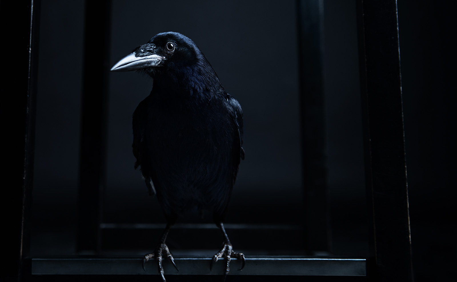 Edgar Allan Poe's 'The Raven' was Published Today in 1845