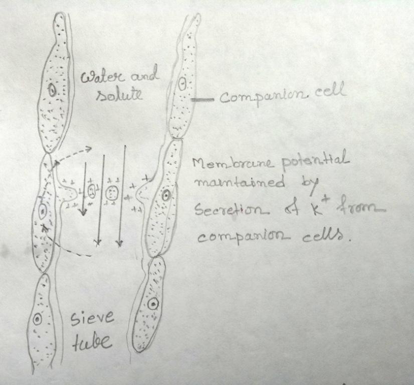 Electroosmotic model
