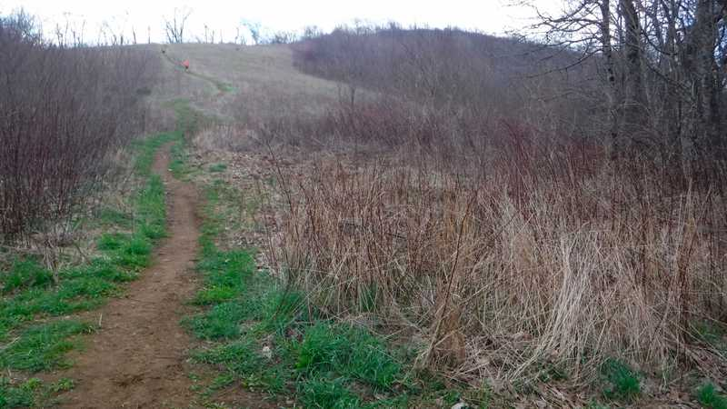 Side trail to Siler Bald