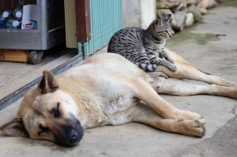 Cat and dog resting outside.