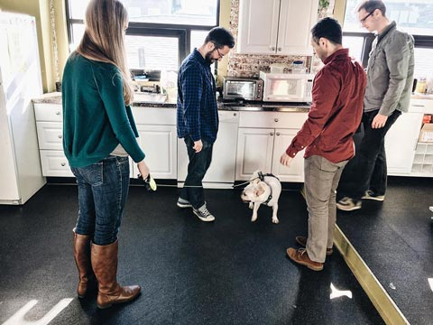 O3 World team members playing with a dog in the office