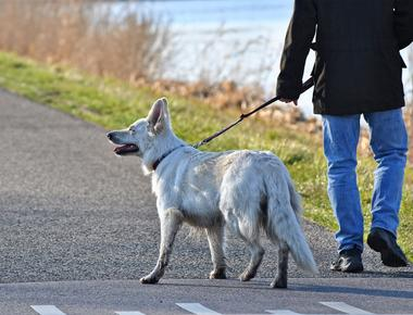 Why Do Dogs Walk Behind You?