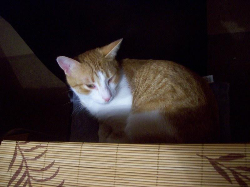 cat111