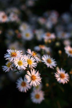 Flowers II 1345