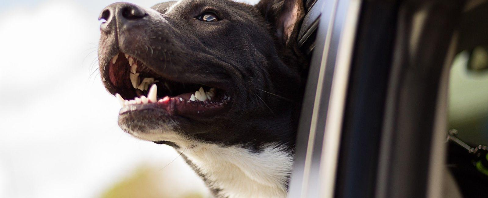 10 Easy Ways to Get Dog Hair Out of Your Car