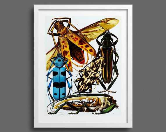Vintage Insect Beetle Print by EA Seguy