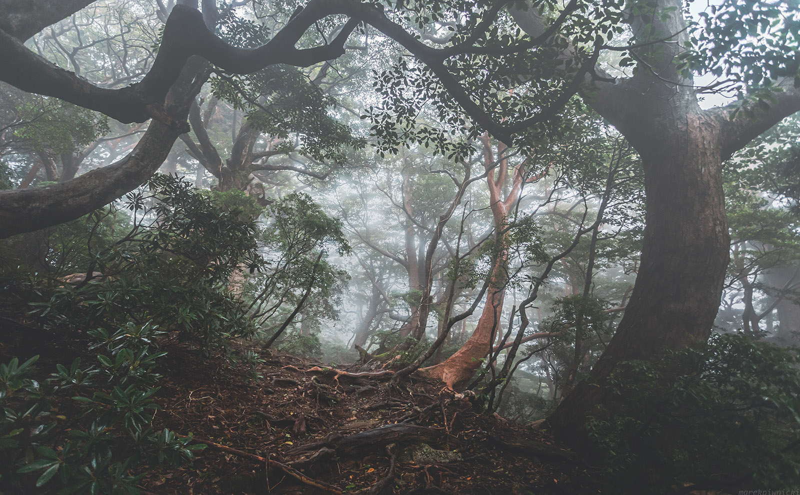 Embark on a Quest from Yakushima Island to Tokyo in the Magical Novel 'Number9Dream'