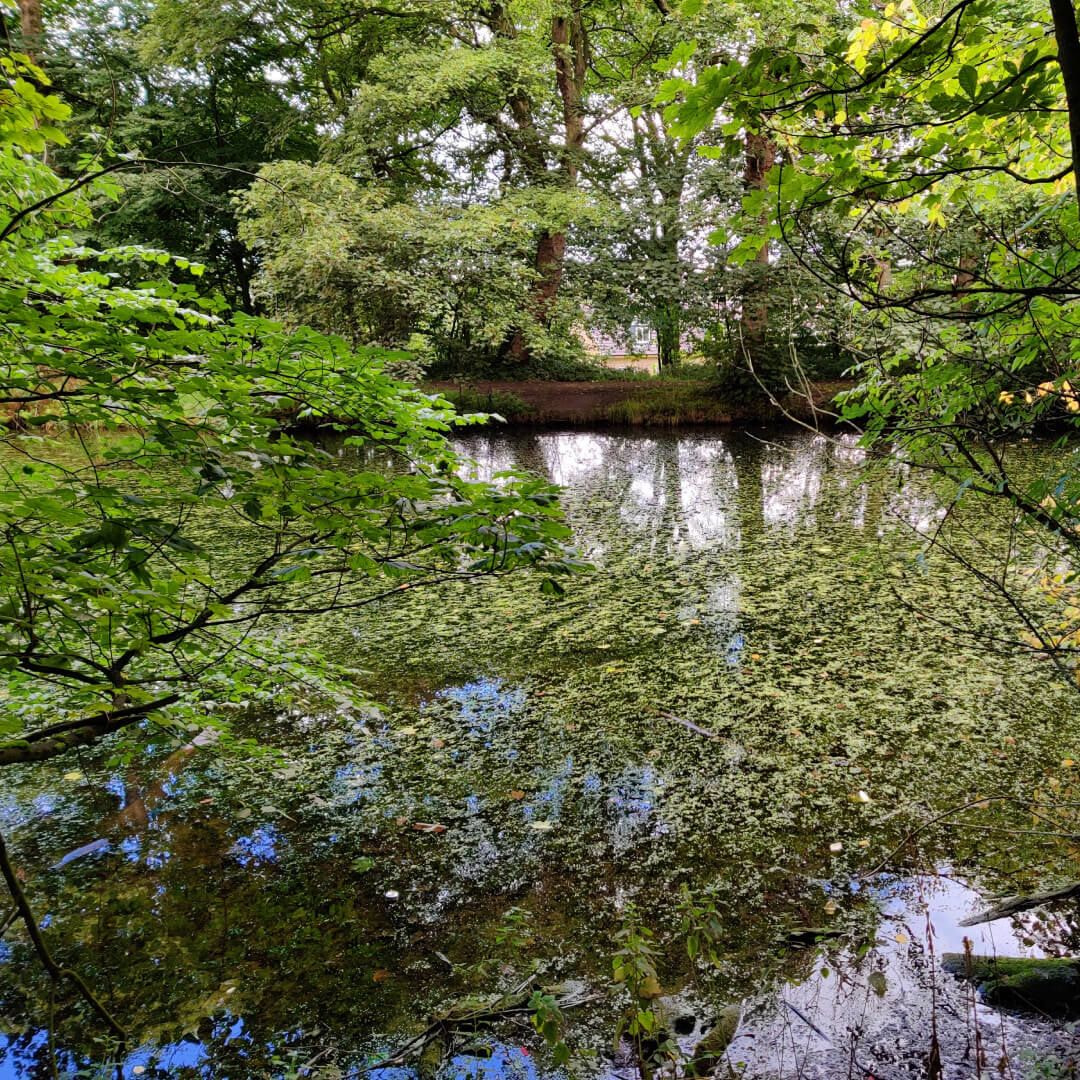 Farnley Hall Fish Pond through the branches