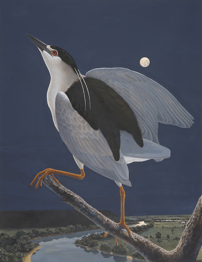 cott Gentling (1942–2011), Stuart Gentling (1942–2006), Black-crowned Night Heron